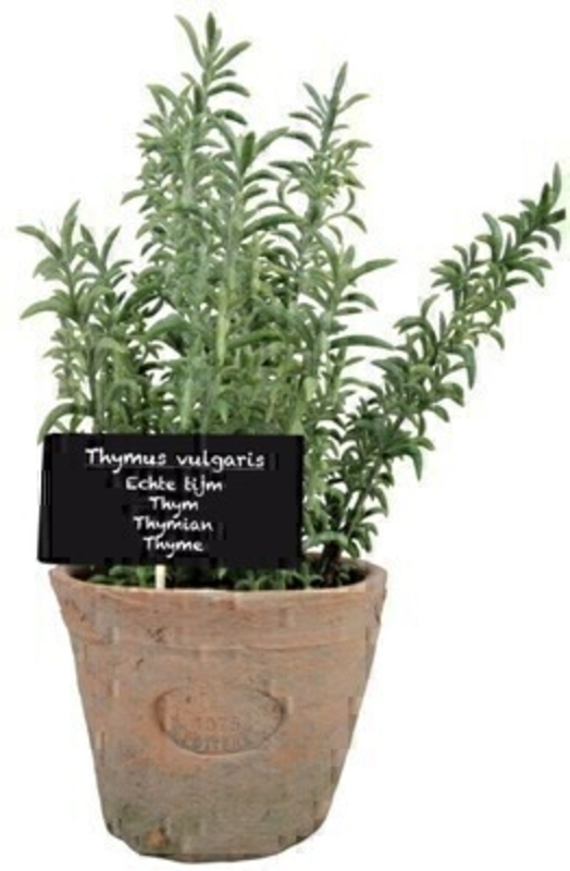 Artificial Thyme plant in aged terracotta pot (large) with wooden plant label with the name of the herb (in Latin Dutch French German and English) in an aged Terracotta pot. Needs no watering! Size: 14 x 12.2 x 26.2cm