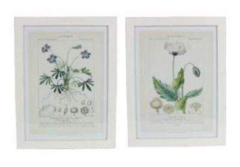 A choice of Botanical Framed Wall Pictures by designer Gisela Graham featuring either a geranium or a poppy botanical print. The botanical prints come mounted in a white frame. If you have a preference when ordering please state either Geranium or Poppy. Size: (LxWxD) 35.5x45.5x2cm