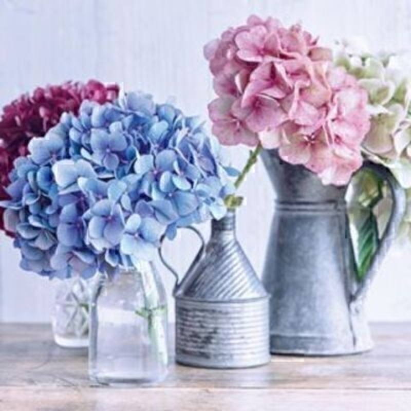 Hydrangeas in Jars and Jugs Blank Card by Paper Rose: Booker Gifts