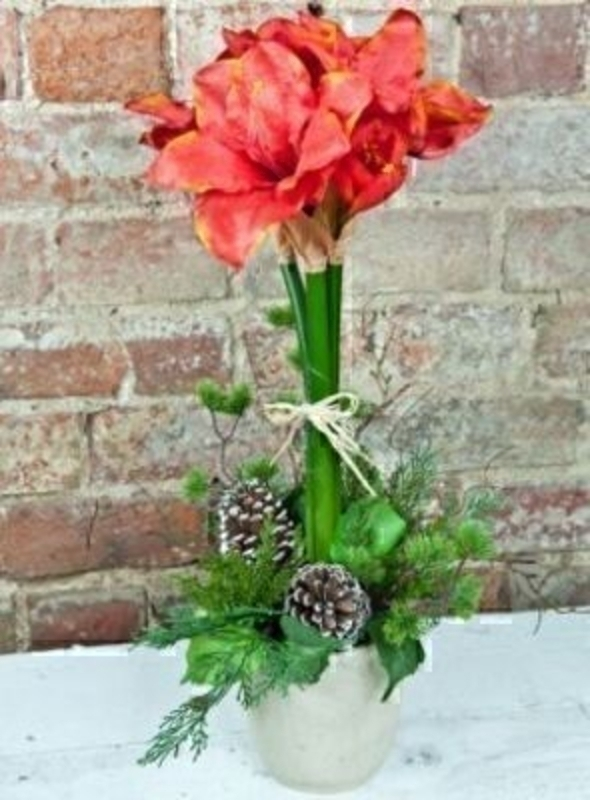 Red And Orange Amaryllis Arrangement By Bloomsbury: Booker Gifts