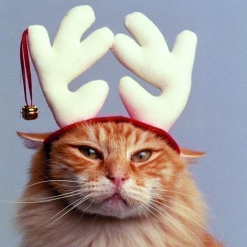 Reindeer Cat Charity Christmas Cards for GOSH: Booker Gifts