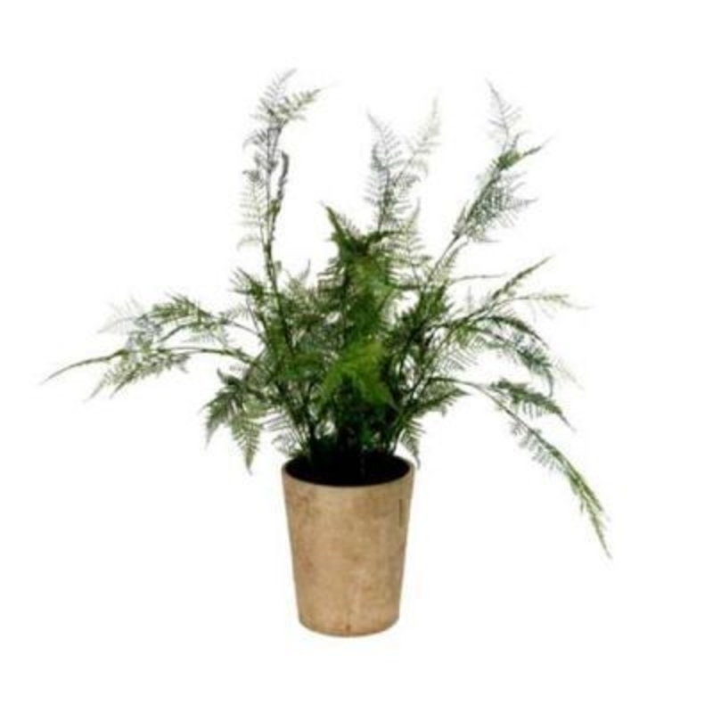 Elegant artificial fern plant in pot by Gisela Graham. This realistic Asparagus fern in modern style pot would brighten any living space or balcony. Size 65x65x65cm