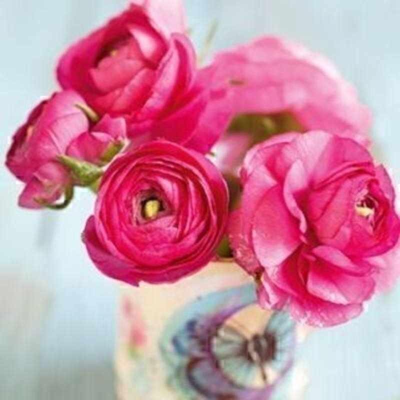 Bright Pink Ranunculus Blank Card by Paper Rose