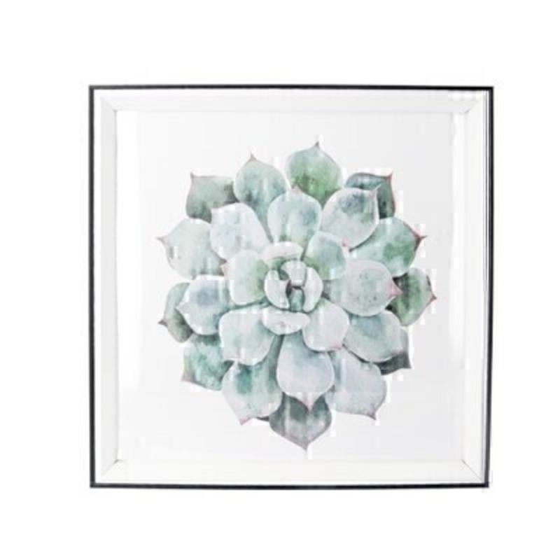Echeveria Framed Square Print By Gisela Graham