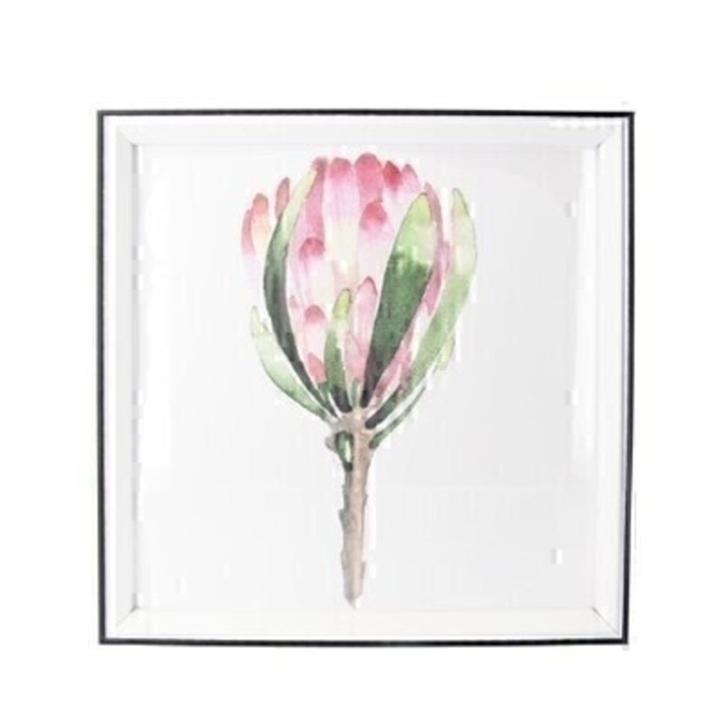 Protea Framed Square Print By Gisela Graham